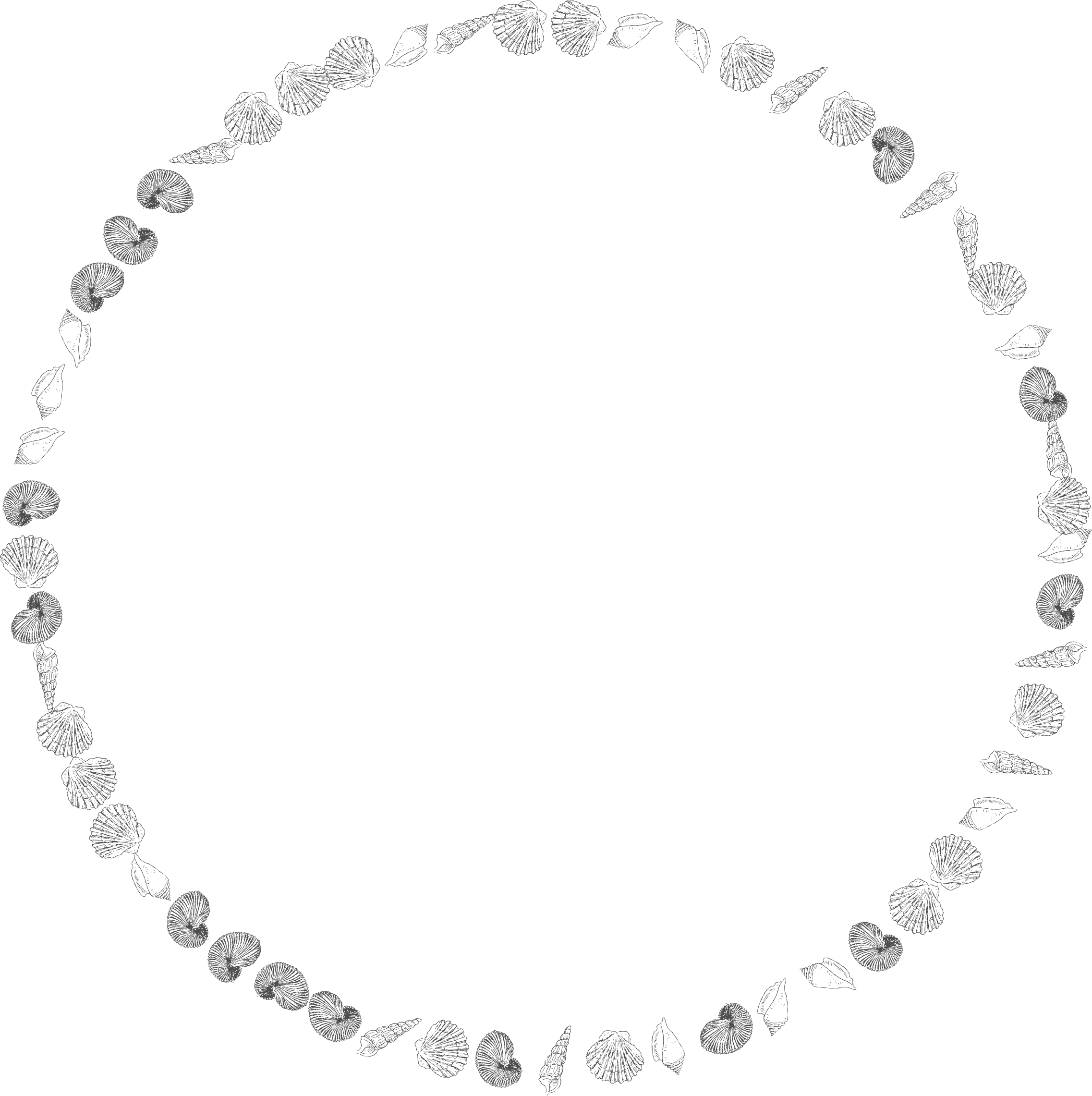 White circle frame png. Clipart round shells big