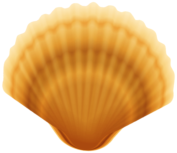 Shell transparent. Clam png image gallery