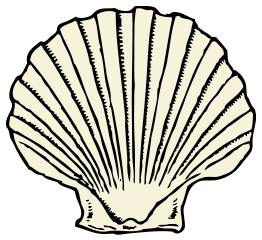 Shell transparent scallop background. Clipart