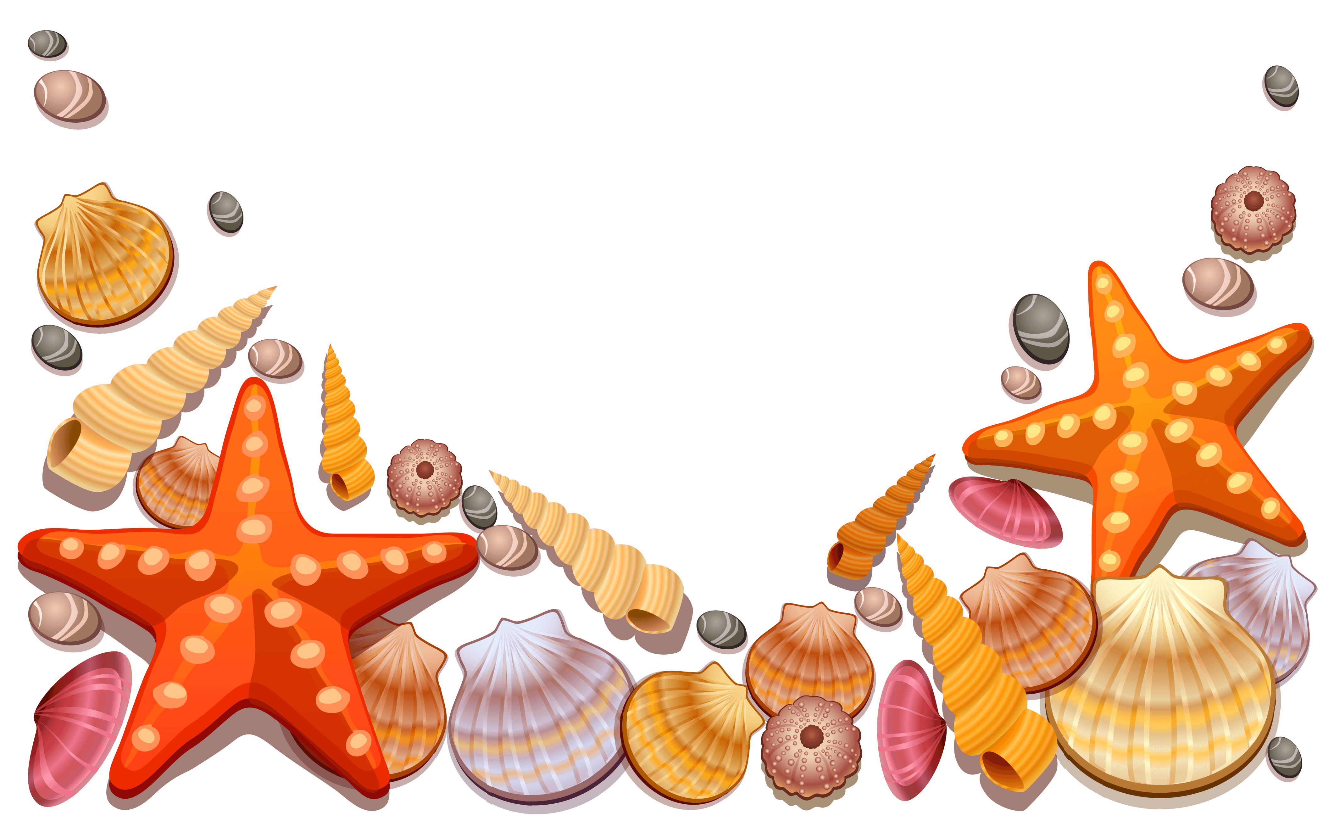 Clam vector shell sea. Conch clipart at getdrawings