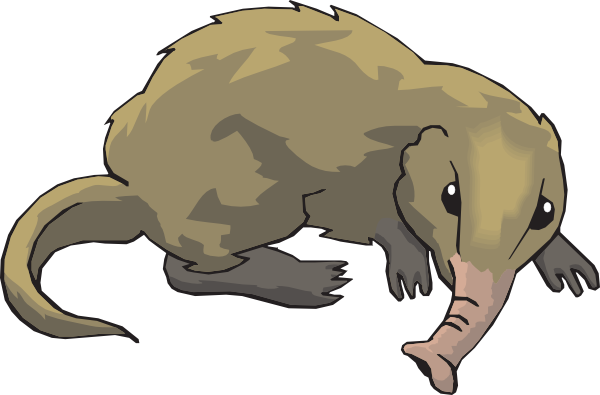 Shrew drawing animated. Long nosed clip art