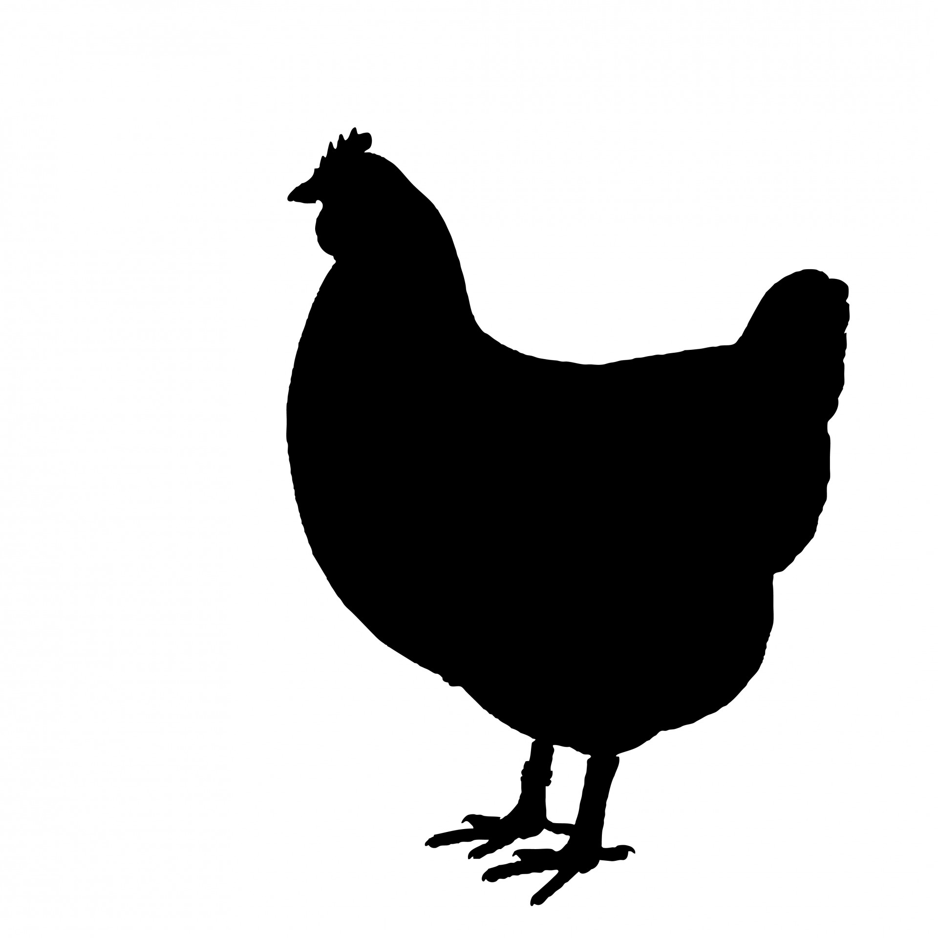 With clipart silhouette. Chicken free stock photo