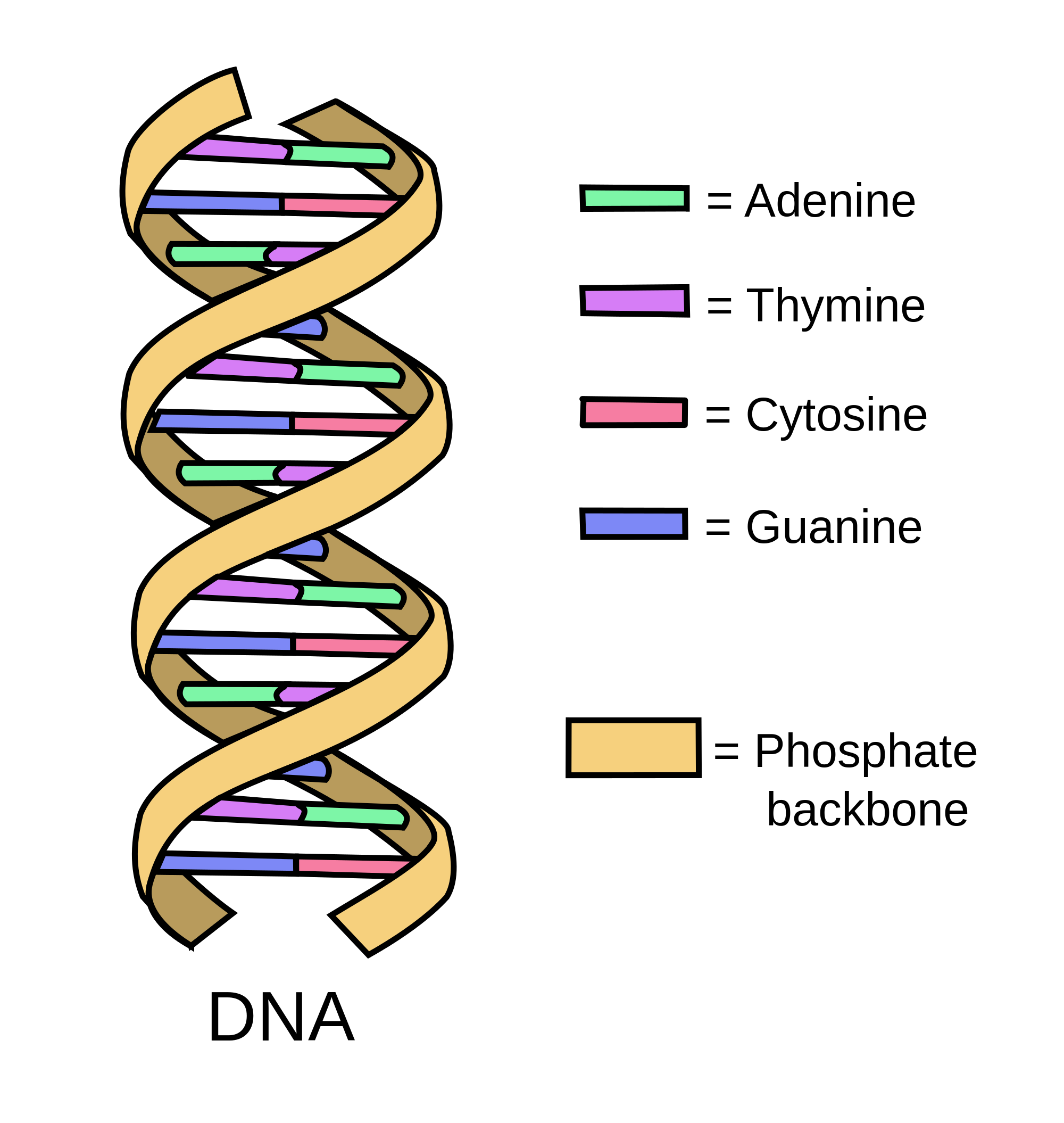Dna and rna lessons. Biology drawing life science image freeuse library
