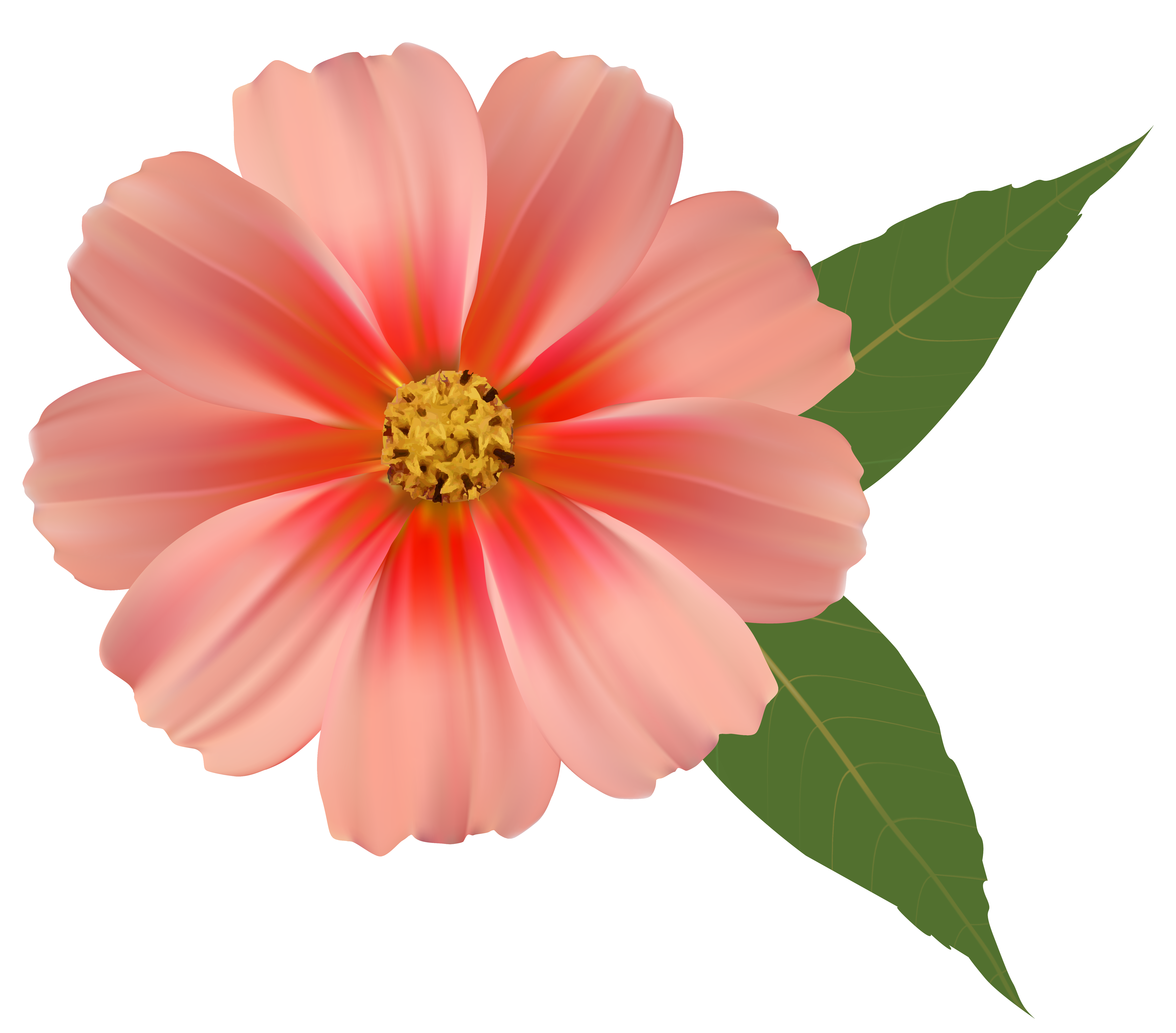 Single flower png. Orange image clipart gallery