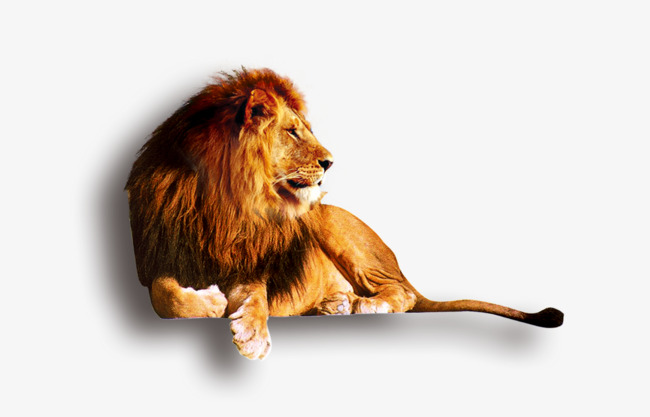 Sit clipart be still. Lion lions png image