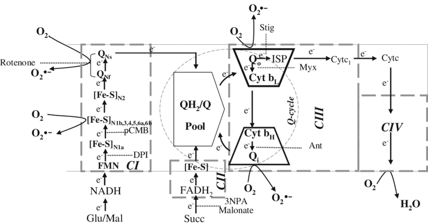 Site drawing pool. Schematic representation of electron