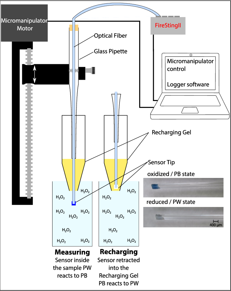 Schematic of the h. Pipette drawing measurement clip art transparent library