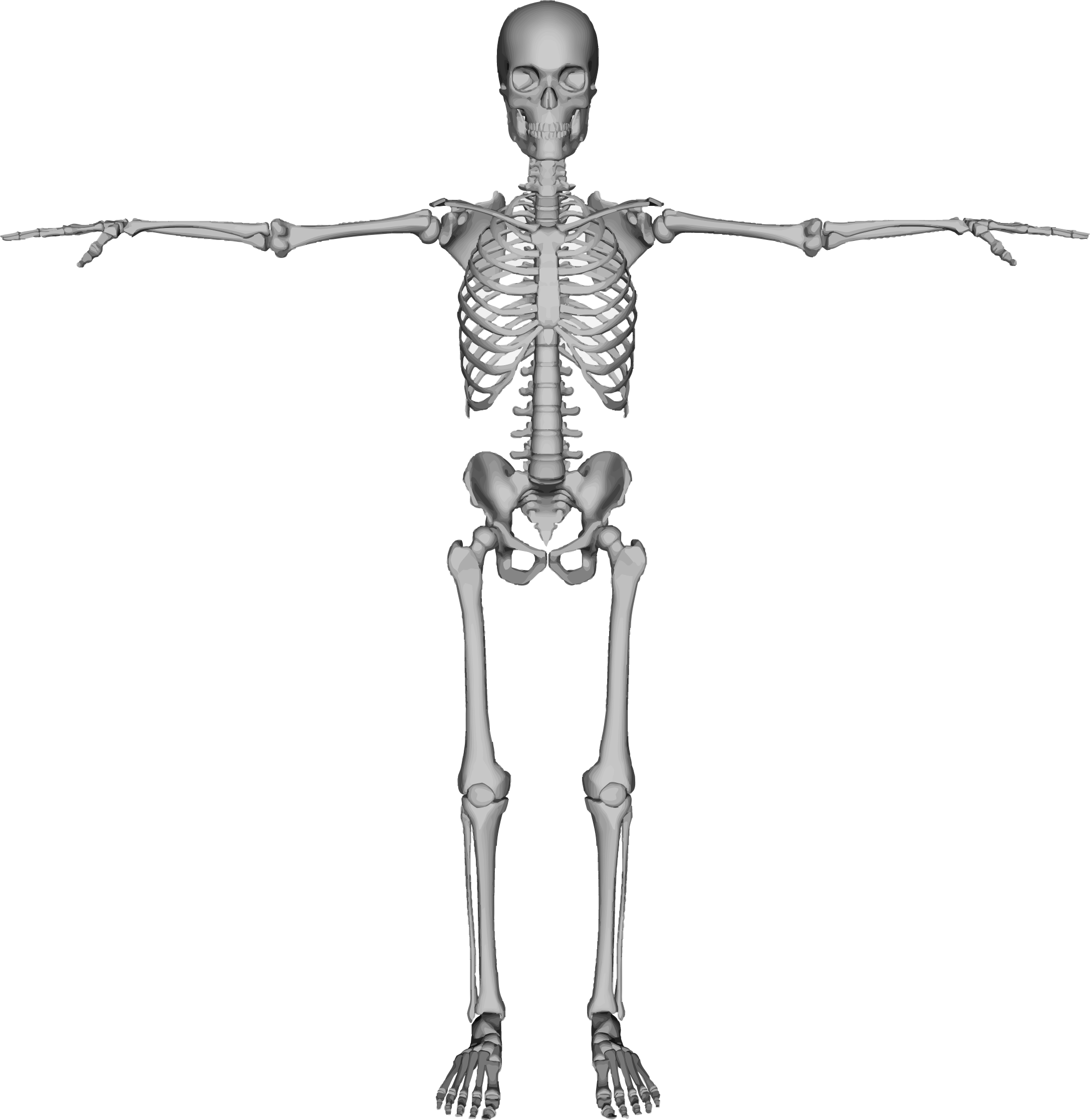 Skeleton arms png. Background transparentpng image information