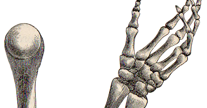 Skeleton arm png. Leaping frog designs hand