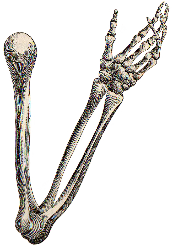 Skeleton arms png. Leaping frog designs hand