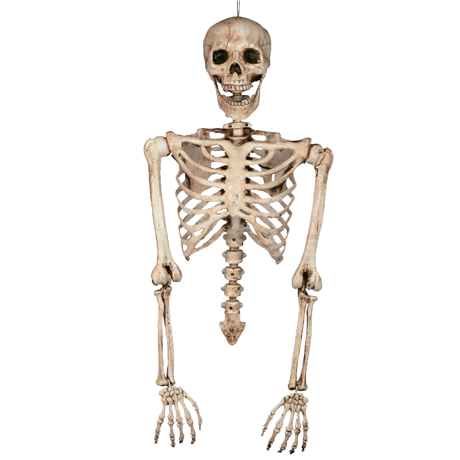Skeleton arms png. Torso su by zombies