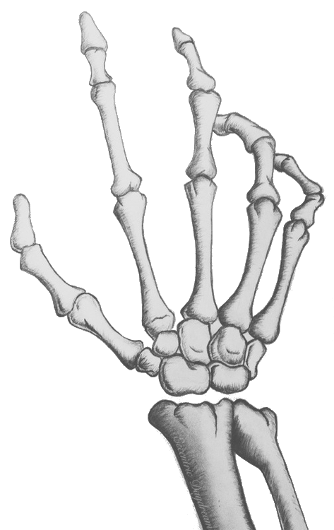 Skeleton arms png. Hand soul p more