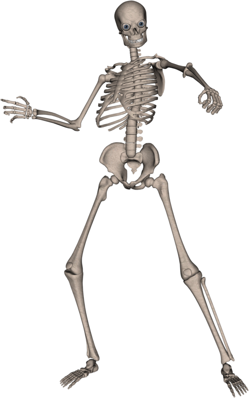 Skeleton arms png. Skulls transparent pictures free