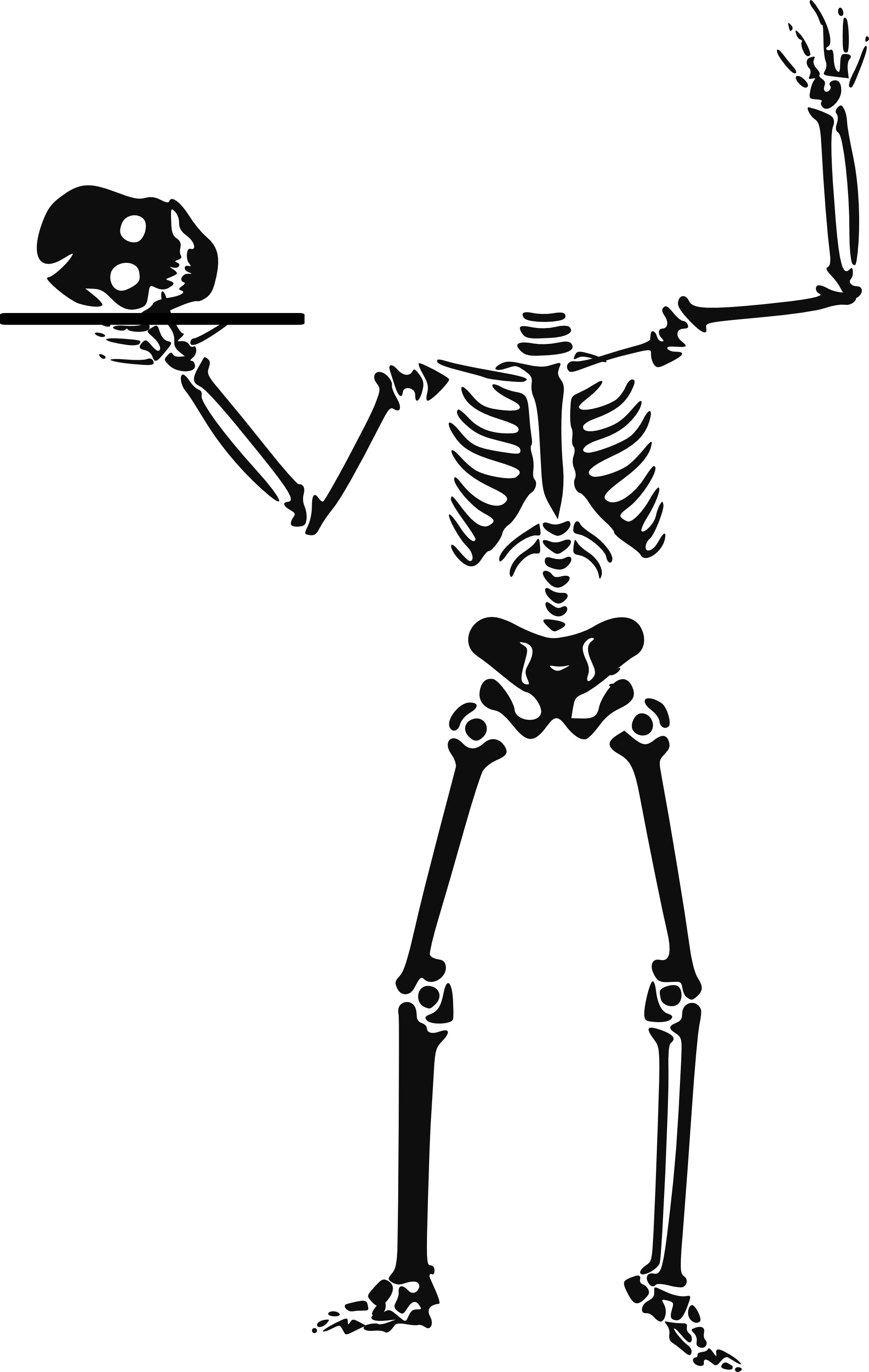 Skeleton clipart chiropractor. Free cliparts download clip