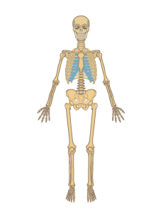 anatomy vector white