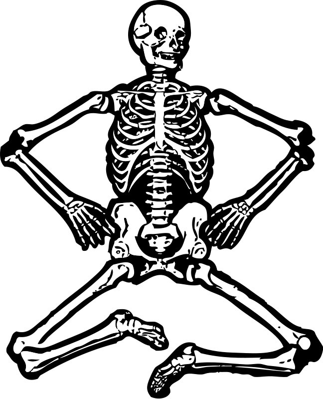 Skeleton clipart chiropractor. Free human download clip