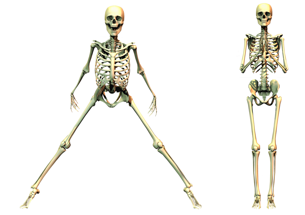 Skeletons drawing anime. Spooky skeleton png stock