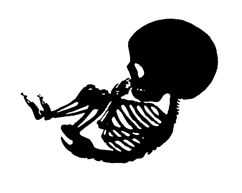Skeletons drawing baby. Collection of skeleton