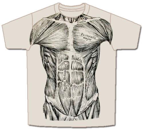 Transparent muscles shirt png. Skeletees anatomical t shirts