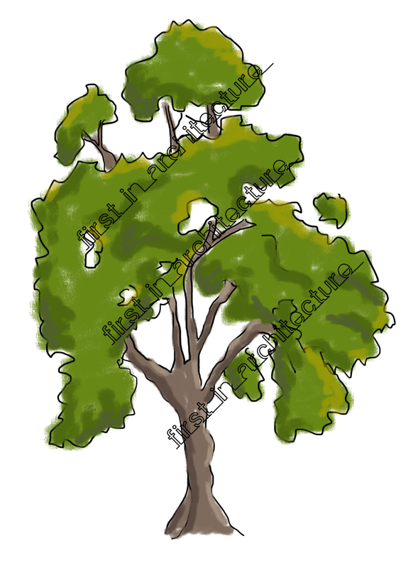 Sketchy trees png. Fia elevation pixels drawings