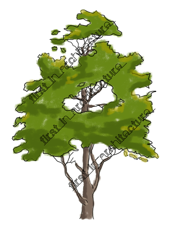 Sketchy trees png. Psd downloads pinterest sketches