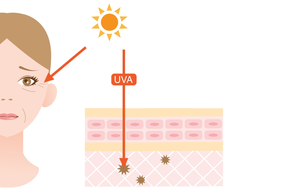 Skin clipart uv radiation. Interesting facts about