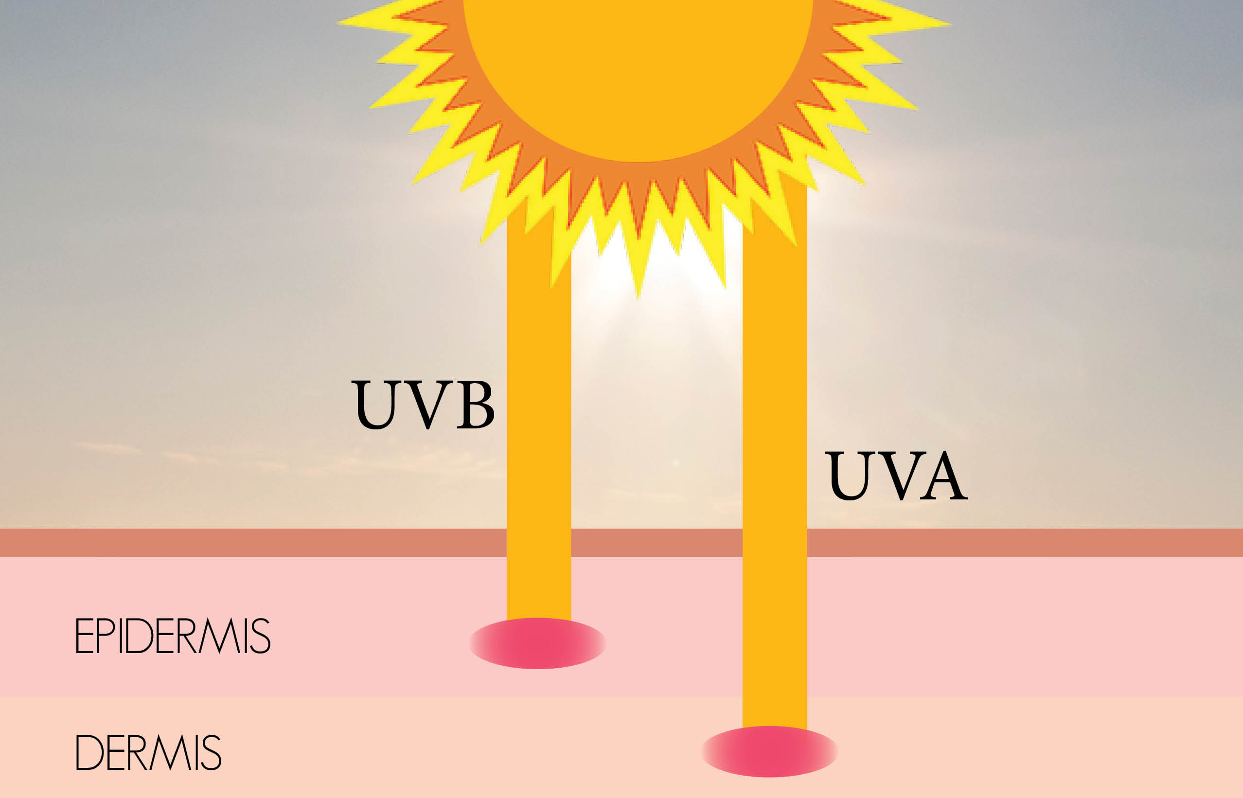 Skin clipart uv radiation. Sun facts prolonged exposure