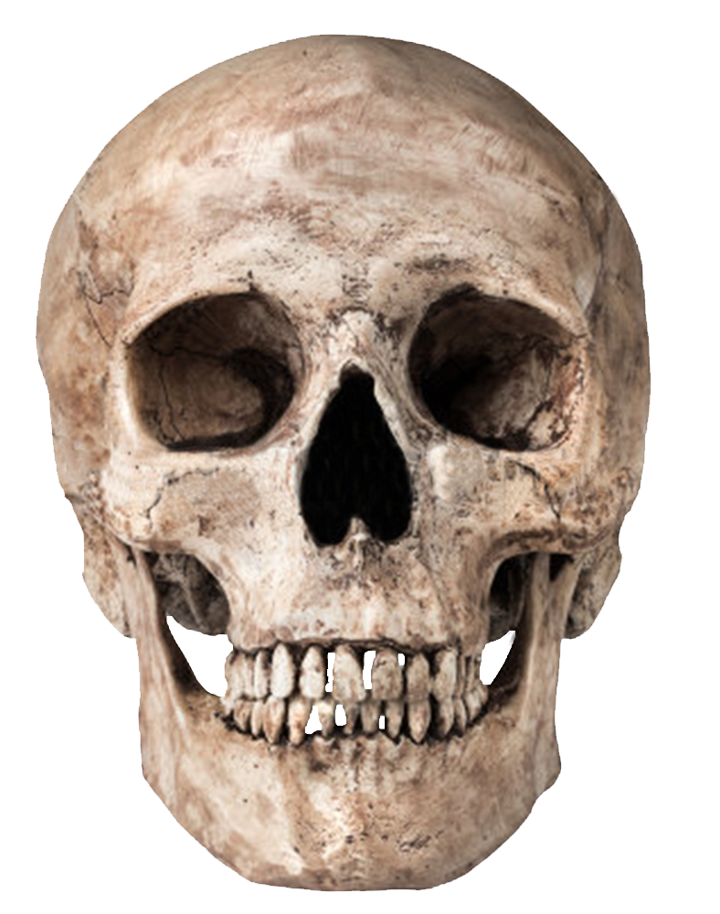 Skull face png. Transparent images all image