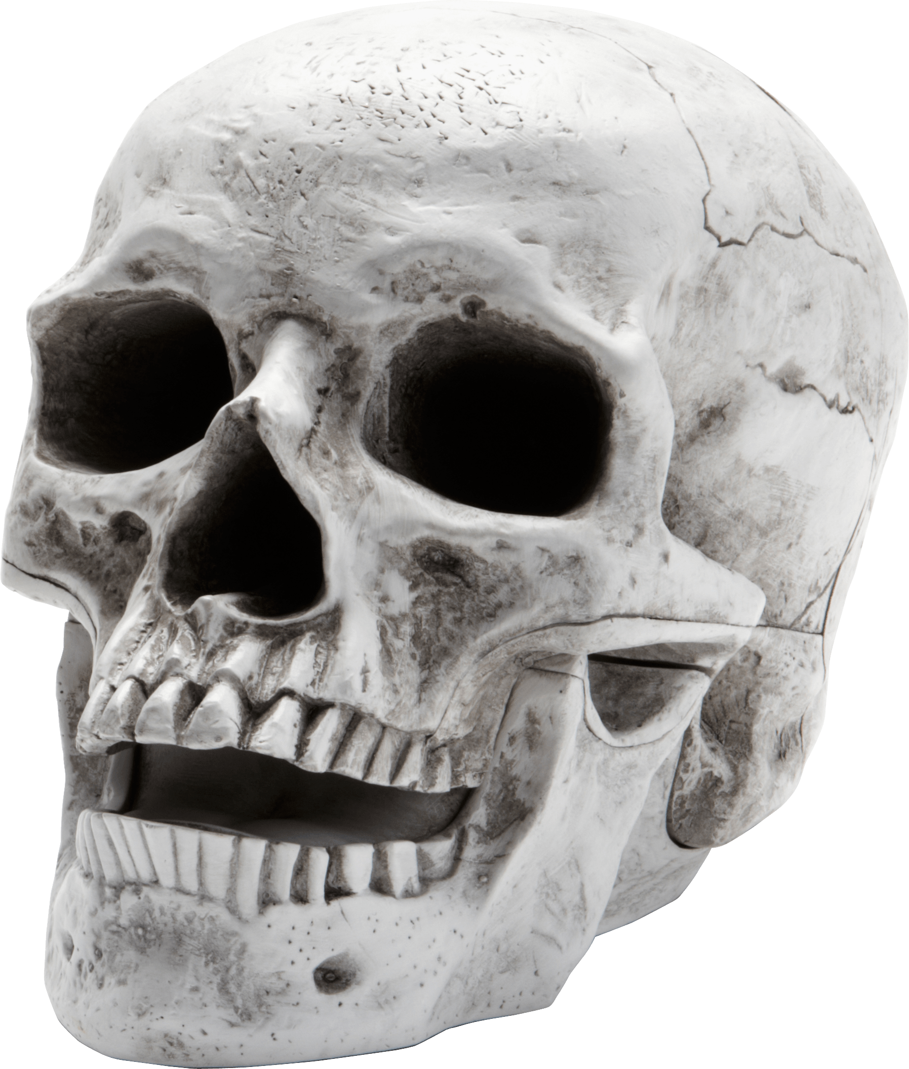 Skull face png. Sideview large transparent stickpng