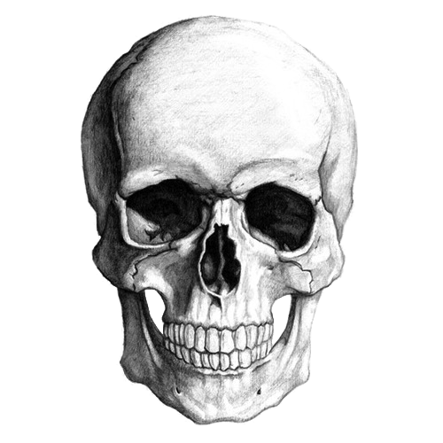Drawing detail skull. White transparent png stickpng