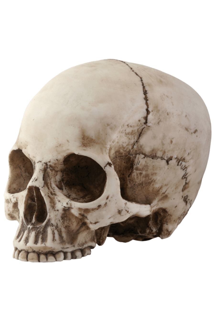 Skull head png. Sideview transparent stickpng people