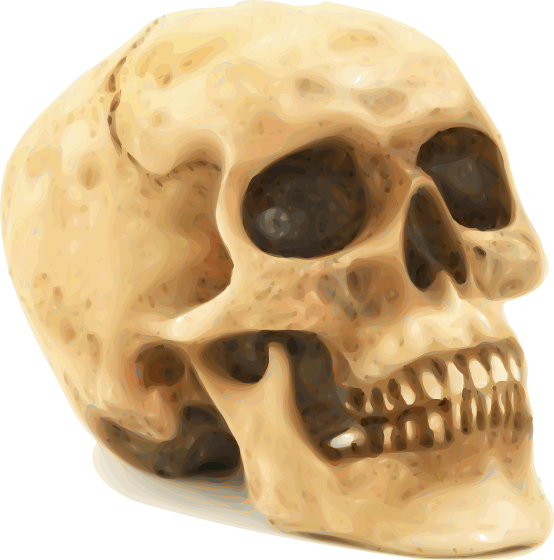 Skull png stock. Free photo illustration of