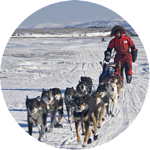 Sledding drawing dog sled race. Kennel tours mushing expeditions