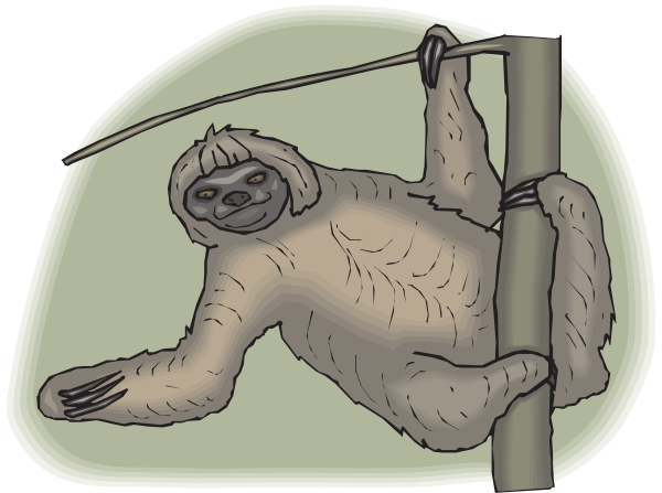 Sloth clipart. Leaning from a branch