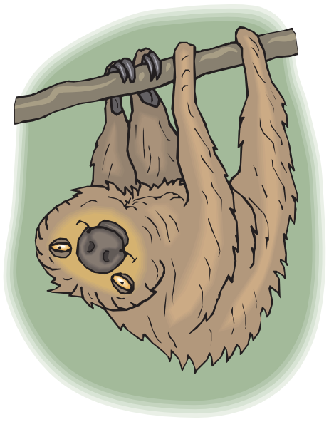 Sloth clipart. Free cliparts download clip