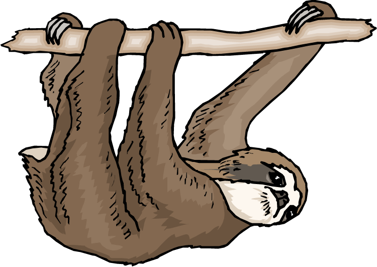Sloth clipart.