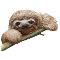 sloth clipart png