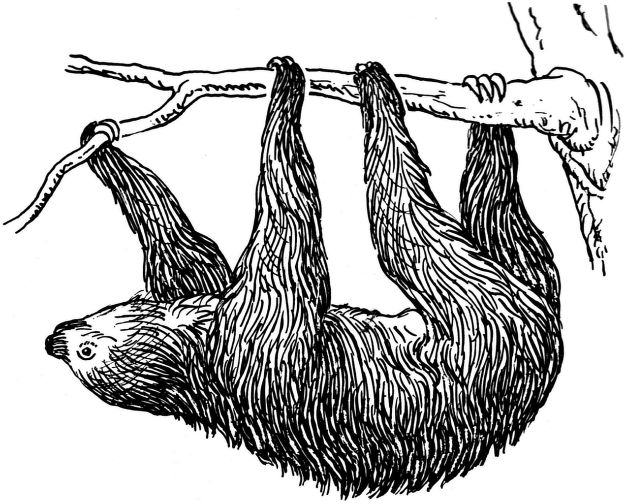 Sloth clipart png. Transparent images made by
