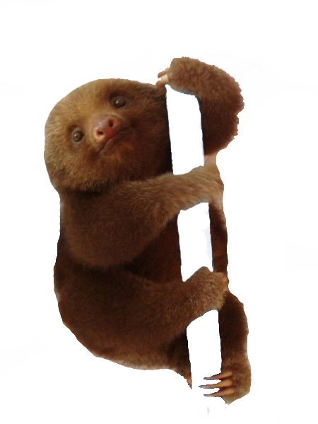 Png images bright wallpapers. Sloth clipart sloth transparent svg library stock