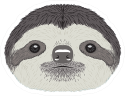 Sloth face png. Cute illustration sticker