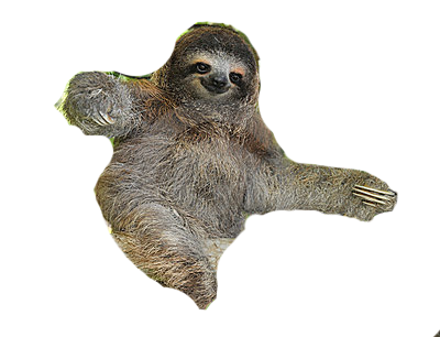 Download free image hq. Sloth face png clipart freeuse library