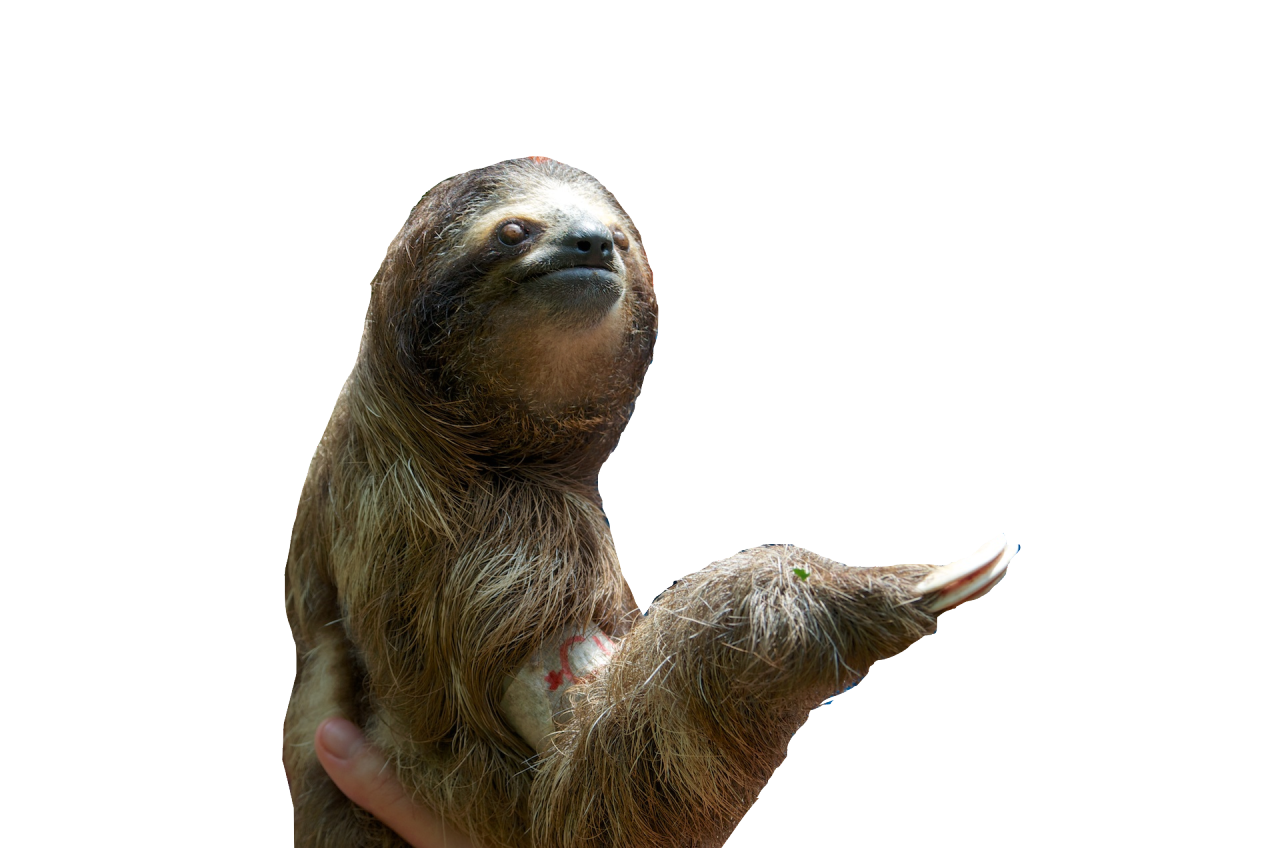 sid the sloth png