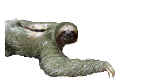 Sloth .png. Siothy cevo member added
