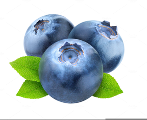 Small blueberry. Free blueberries clipart images