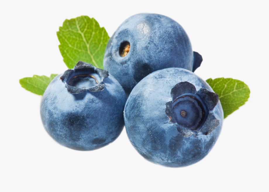 Small blueberry. Blueberries png transparent background