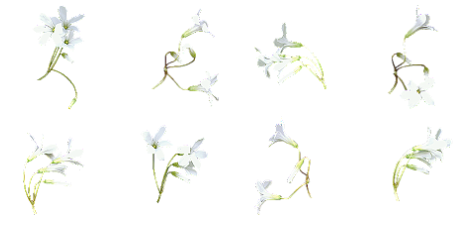 Small flowers png. Index of users tbalze