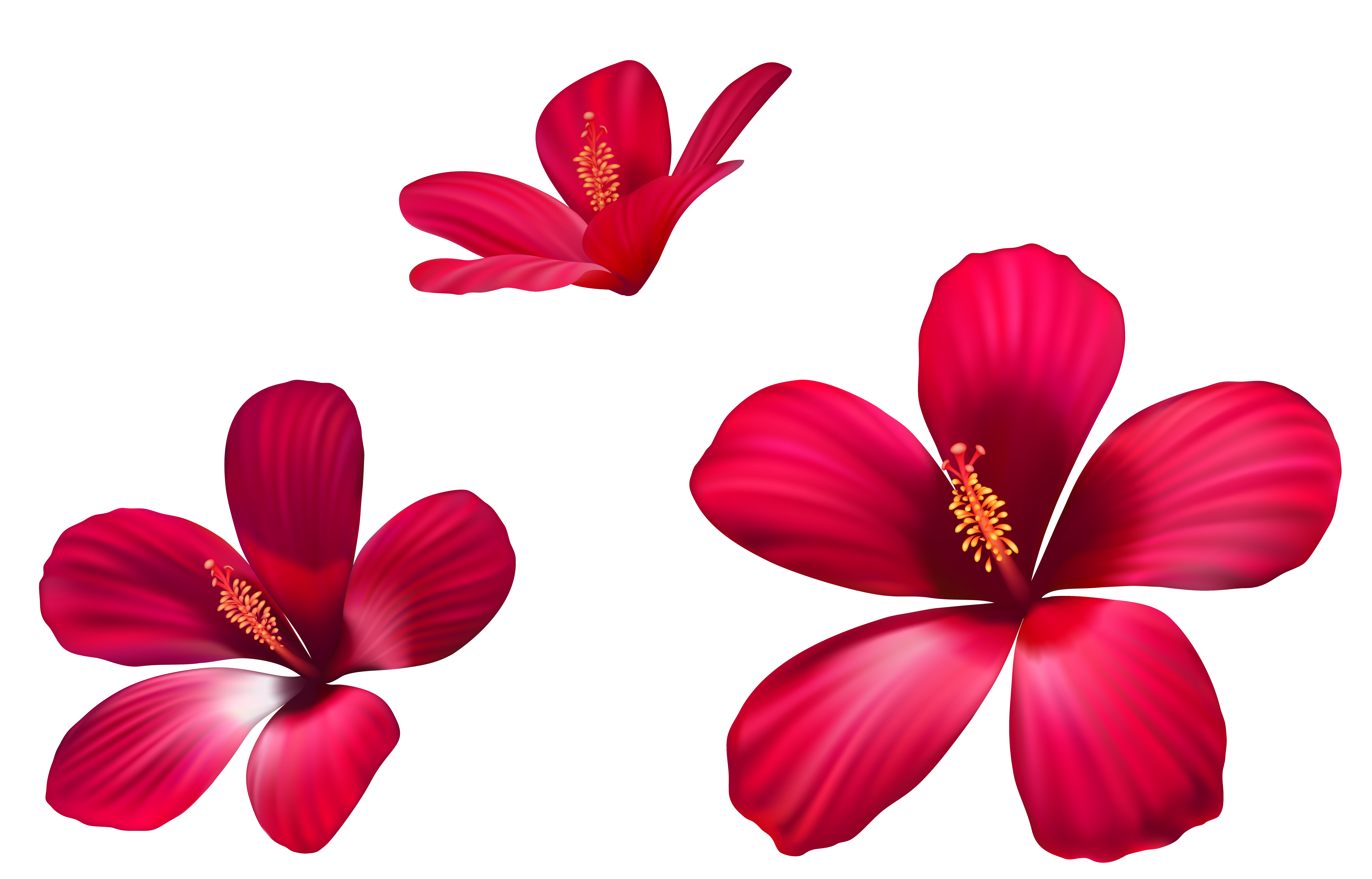 Small flowers png. Exotic pink clipart image