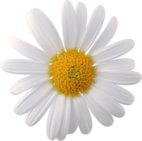 Small flowers png. Image