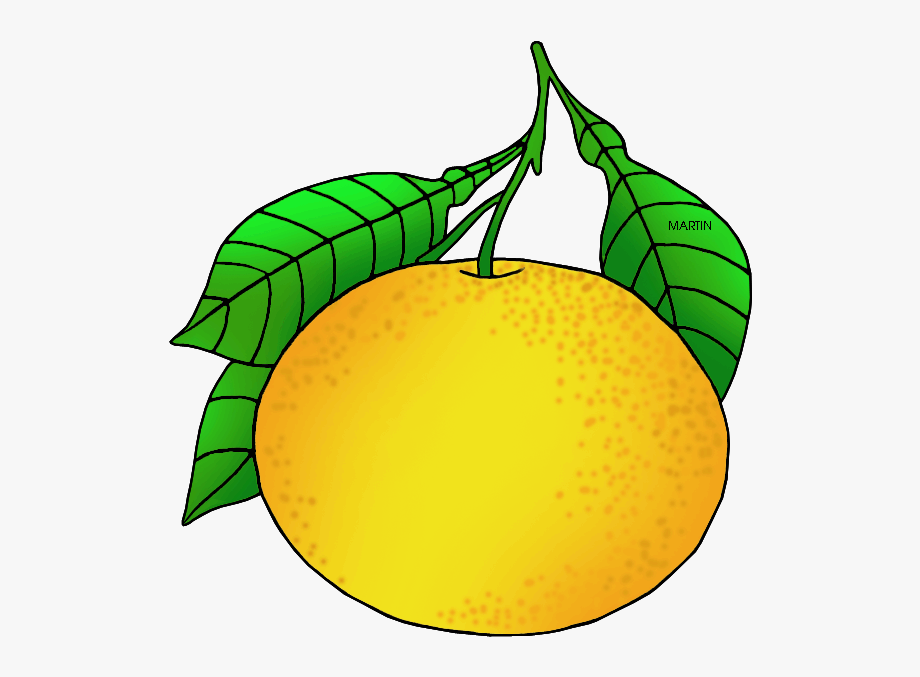 Small grapefruit. Texas state fruit clipart