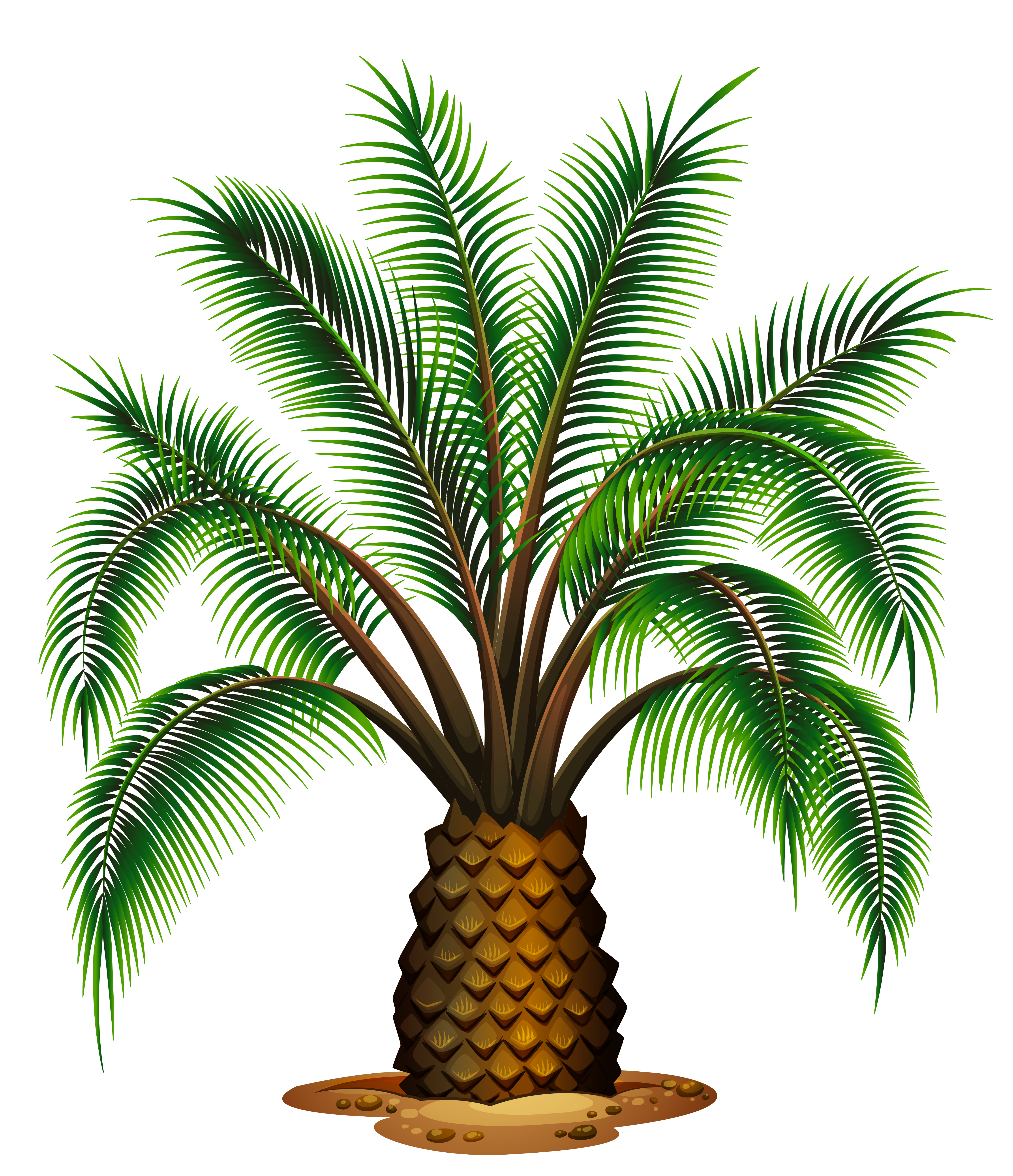 Small palm tree png. Transparent picture gallery yopriceville